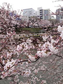 2015花見 1外濠と総武線.jpg