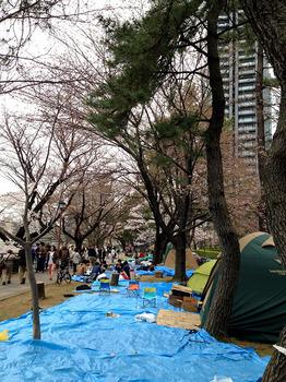 2015花見 4会社の陣取り テント急増中.jpg