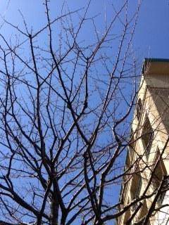 アグネスホテルの青空.JPG