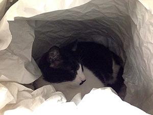 パッキング猫03.jpg