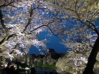 千鳥ヶ淵の夜桜 14 群青の空と水と 横構図.jpg