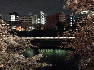 外堀の夜桜 24 総武線.jpg