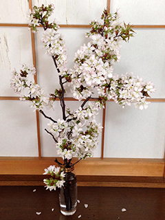 山桜の枝 03 全体.jpg