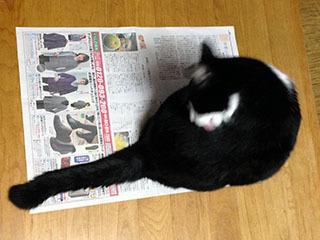新聞を読ませない猫 04 さのよいよい.jpg