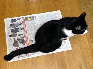 新聞を読ませない猫 05 ああこりゃこりゃ.jpg