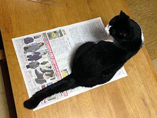 新聞を読ませない猫 06 ん?呼んだ?.jpg