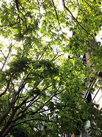 東京駅中 15 緑の天井.jpg