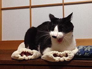 猫アーマーが下敷き 02 あくび.jpg