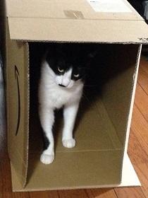 長い箱.jpg